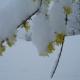 neve sui fiori